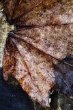 Zakończenie jesień liść Obrazy Stock