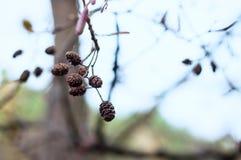 Zakończenie jesieni gałąź Obraz Royalty Free