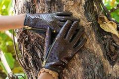 Zakończenie kobiet ręki z luksusowymi pytonu snakeskin rękawiczkami na drewnianym natury tle na tropikalnej Bali wyspie, Indonezj obrazy stock