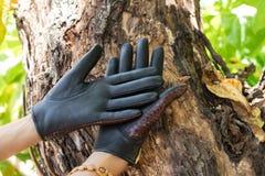 Zakończenie kobiet ręki z luksusowymi pytonu snakeskin rękawiczkami na drewnianym natury tle na tropikalnej Bali wyspie, Indonezj zdjęcia royalty free