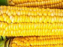 Zakończenie koloru żółtego kukurudza obraz royalty free