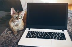 Zakończenie krótkopęd laptop z puste miejsce kopii przestrzeni ekranem dla twój zawartości lub wiadomości tekstowej Obraz Royalty Free
