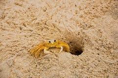 Zakończenie krab blisko swój nory w piasku na plaży Juquey obraz stock