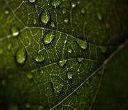 Zakończenie liść z kropelkami zdjęcie stock
