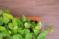 Zakończenie mała roślina na ceramicznym garnku na ziemi dla tła Obrazy Stock