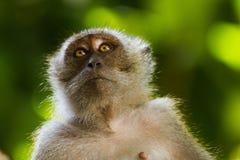 Zakończenie małpa na drzewie zdjęcie royalty free