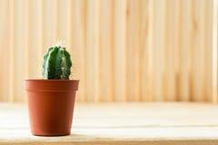 Zakończenie mały kaktus w brown kwiatu garnku stoi na lekkim drewnianym wieśniaka stole Obrazy Stock