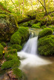 Zakończenie mały lasowy strumień blisko Trzeci krypty up Spada obraz royalty free