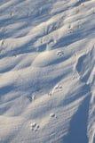 Zakończenie mali psi łapa druki, ślada w śniegu blisko Arviat lub Fotografia Stock