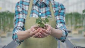 Zakończenie mknąca kobieta wręcza mienie rośliny w rękach z ziemią zbiory