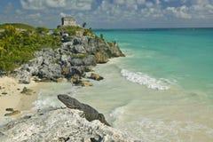 Zakończenie na jaszczurce z tłem Templo Del Dios del Viento Majskie ruiny Ruinas De Tulum w Quintana Roo, Yuc (Tulum ruiny) Obraz Stock