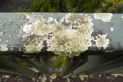 Zakończenie na liszaju dorośnięciu na drewnianym poręczu Zdjęcia Royalty Free