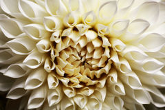 Zakończenie na sepiowym kwiacie Zdjęcia Royalty Free