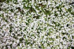 Zakończenie na wiele białym i purpurowym małym polu kwiaty Backgr Zdjęcie Royalty Free