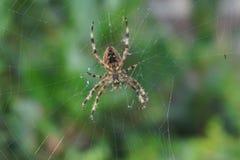 Zakończenie pająk wewnątrz Obrazy Royalty Free