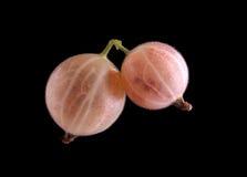 Zakończenie piękni makro- różowi agresty Dwa zdrowej soczystej jagody na czarnym tle i owoc Zdjęcia Royalty Free