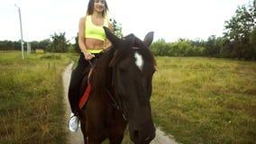 Zakończenie piękny Brown koń zdjęcie wideo