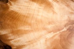 Zakończenie piękny iryzuje i migocący naturalny wzór drewniany gnarl Zdjęcia Royalty Free