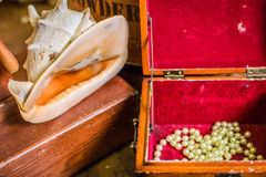 Zakończenie piękny seashell Zdjęcia Royalty Free