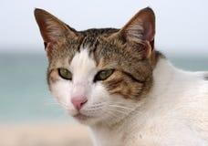 Zakończenie portret szarość paskował domowego kota z żółtymi oczami Obrazy Stock