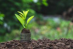 Zakończenie ręka osoby mienia moneta z glebową i młodą rośliną o Obraz Royalty Free