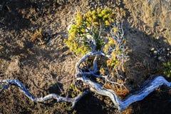 Zakończenie roślina która ximpx w srogim terenie górzystym w ranku słońcu Mnie Fotografia Stock