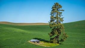 Zakończenie samotna chałupa w Palouse i drzewo Obrazy Royalty Free
