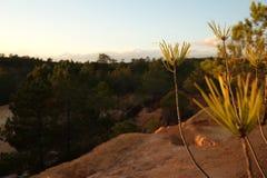 Zakończenie sosny rozgałęzia się z lasem i niebem Fotografia Stock