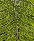 Zakończenie spód Paprociowy liść z zarodnikami zdjęcie royalty free