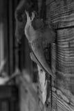 Zakończenie stara czaszka zwierzę Zdjęcie Stock
