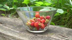 Zakończenie szklany puchar z świeżymi organicznie truskawkami w starych anglikach up uprawia ogródek z zielonym tła latem zbiory