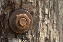 Zakończenie szorstkiej powierzchni naturalna drewniana tekstura, drewniany tekstury tło obrazy stock