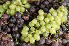 Zakończenie taca z różnymi rodzajami stołowi winogrona świeżo zbierający fotografia stock