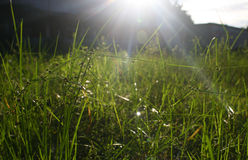 Zakończenie trawiasty pole przeciw jaskrawemu słońcu Fotografia Stock