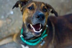 Zakończenie uśmiech piękny kundla pies w północnym zachodzie Argentyna zdjęcia royalty free