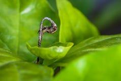 Zakończenie up, abstrakt, suchy liść, zieleń naturalna, wibrujący, Zdjęcia Stock