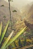 Zakończenie up agava rośliny i skaliste góry w tle w Xo-xo dolinie w Santo Antao wyspie, przylądek Verde Zdjęcia Stock
