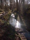 zakończenie up bieg strumienia woda przez lasowej podłogowej wiosny nat Zdjęcie Stock