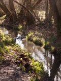 zakończenie up bieg strumienia woda przez lasowej podłogowej wiosny nat Fotografia Stock