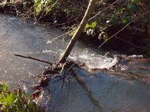 zakończenie up bieg strumienia woda przez lasowej podłogowej wiosny nat Zdjęcia Stock