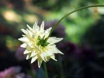 Zakończenie up i ogniskowanie za żółtym kwiatem obraz stock