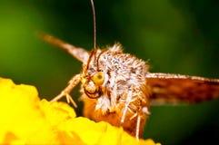 Zakończenie up insekt obraz royalty free