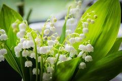 Zakończenie up leluja kwiat dolina w wielkim bukiecie zdjęcie stock