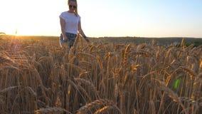 Zakończenie up młoda dziewczyna w okularach przeciwsłonecznych iść z jej psem przez spikelets przy łąką Śliczny siberian husky ci zdjęcie wideo