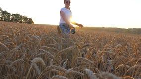Zakończenie up młoda dziewczyna w okularach przeciwsłonecznych iść z jej psem przez spikelets przy łąką Śliczny siberian husky ci zbiory
