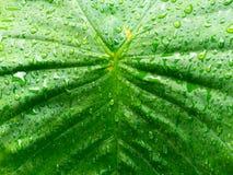 Zakończenie up nawadnia na liściu po tym jak deszcz opuszcza zdjęcia royalty free