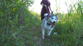 Zakończenie up siberian husky pies ciągnie smycz podczas odprowadzenia wzdłuż śladu blisko rzeki Młoda dziewczyna iść wzdłuż ście zbiory