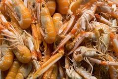 Zakończenie up strzelał shellfish na wprowadzać na rynek kram Zdjęcia Stock