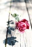 Zakończenie up strzelał wysuszona czerwieni róża na drewnie Fotografia Royalty Free
