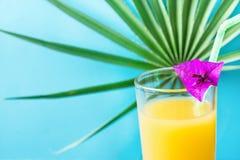 Zakończenie Up Wysoki szkło z Świeżo Naciskającą Tropikalnych owoc soku słomą i Małym kwiatem Round drzewko palmowe liść na Błęki Fotografia Royalty Free